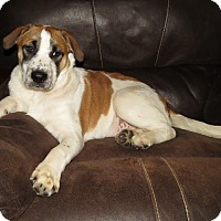 Adopt A Pet :: Miguel-Illinois - Wood Dale, IL