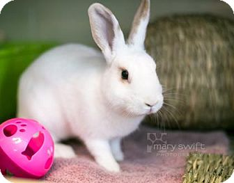 American Mix for adoption in Reisterstown, Maryland - Heidi