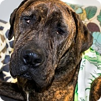 Adopt A Pet :: BALBOA (video) - Los Angeles, CA