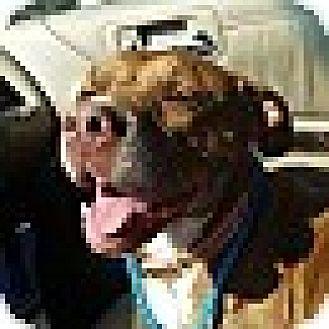 Terrier (Unknown Type, Medium) Mix Dog for adoption in Fairfax, Virginia - Sally