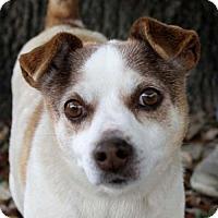 Adopt A Pet :: Florence - San Antonio, TX