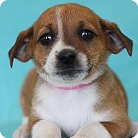 Adopt A Pet :: Anita - Waldorf, MD