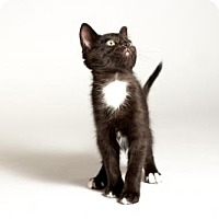 Adopt A Pet :: Toby - Kingston, ON
