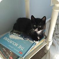 Adopt A Pet :: Astro - Trenton, NJ
