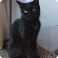 Adopt A Pet :: Chica - Toronto, ON