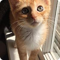 Adopt A Pet :: Curry - Duluth, GA