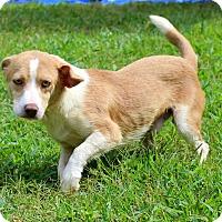 Adopt A Pet :: Parson - Glastonbury, CT