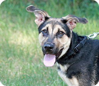 German Shepherd Dog Mix Dog for adoption in Marietta, Georgia - Zeus