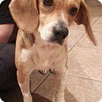 Adopt A Pet :: Ruby - Russellville, KY