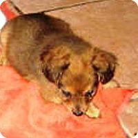 Adopt A Pet :: Christopher - Chandler, AZ