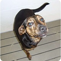 Adopt A Pet :: Blackie - Winter Haven, FL