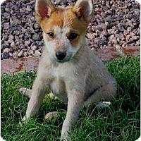 Adopt A Pet :: Zena - Phoenix, AZ
