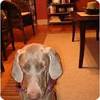 Adopt A Pet :: Izzy  **ADOPTED** - Eustis, FL