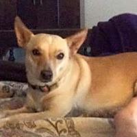 Adopt A Pet :: Tilly (Clover) - Henderson, NV