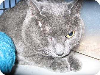 Domestic Shorthair Cat for adoption in Colmar, Pennsylvania - Rita -Adoption Pending!