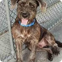 Adopt A Pet :: Oscar - Ruskin, FL