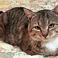 Adopt A Pet :: Chevy - Youngsville, NC