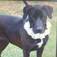 Adopt A Pet :: Venus - Bristol, TN