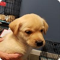 Adopt A Pet :: Schultz - Alpharetta, GA