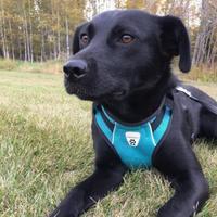 Adopt A Pet :: Taga - Athabasca, AB
