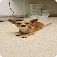 Adopt A Pet :: *FRANKIE - Bakersfield, CA