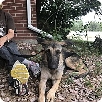 Adopt A Pet :: BEATRIZ - Littleton, CO