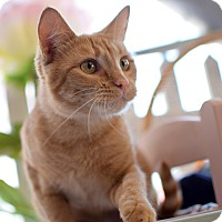 Adopt A Pet :: Ginger - Boise, ID