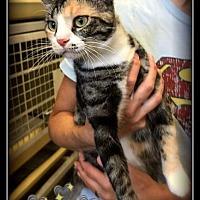 Adopt A Pet :: Alana - Hartford City, IN
