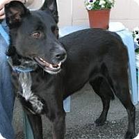 Adopt A Pet :: Sheba AKA Chrissy - Canoga Park, CA