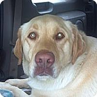 Adopt A Pet :: Bella - Hazard, KY