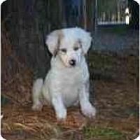 Adopt A Pet :: Trooper (GA) - Orlando, FL