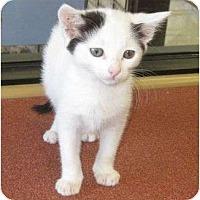 Adopt A Pet :: Squeaks - Riverside, CA