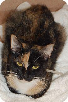 Domestic Shorthair Cat for adoption in Cumming, Georgia - Scarlett
