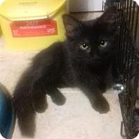 Adopt A Pet :: Artemis - McDonough, GA