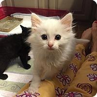 Adopt A Pet :: Winter - Bentonville, AR