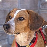 Adopt A Pet :: Sally - Norman, OK