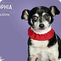 Adopt A Pet :: Sophia - Creston, CA