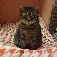 Adopt A Pet :: Jasmine - Monroe, LA