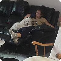 Adopt A Pet :: Murry - Oviedo, FL