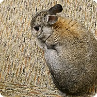 Adopt A Pet :: Reuben - Conshohocken, PA