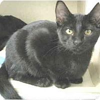 Adopt A Pet :: Baby Bear - Mesa, AZ