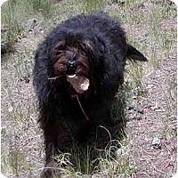 Adopt A Pet :: Hanna - Florissant, CO