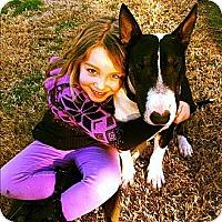 Adopt A Pet :: Lenard aka Spike - Sachse, TX