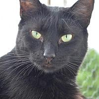 Adopt A Pet :: Prestina - Griswold, CT
