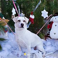 Labrador Retriever/Basset Hound Mix Dog for adoption in Baton Rouge, Louisiana - Princess