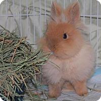 Adopt A Pet :: Pretty Girl - Conshohocken, PA