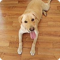 Adopt A Pet :: Bo - Adoption Pending! - Hillsboro, IL