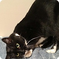 Adopt A Pet :: Hemi - East Brunswick, NJ