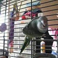 Adopt A Pet :: Kiwi - Neenah, WI