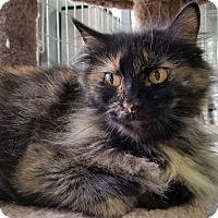 Adopt A Pet :: Delilah - Montgomery City, MO